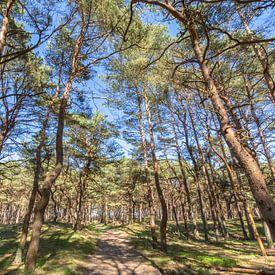 Im Wald auf der Schaabe, Glowe auf Rügen von GH Foto & Artdesign