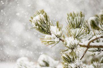 Den in de sneeuw van Nicole Nagtegaal
