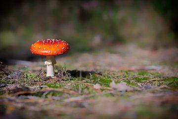 Mushroom fly agaric van