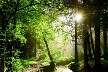 Bos met beekje in de zon van Günter Albers