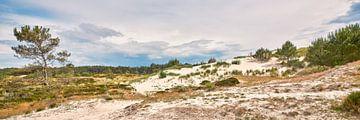 Paysage de dunes hollandais sur eric van der eijk