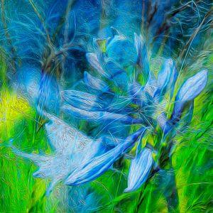 Fine-Art #1 (Natuur als Kunst)