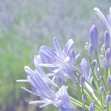 Blauwe zomerliefde van Ellinor Creation
