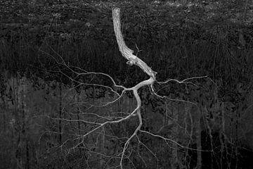 bliksem von Arno Photo