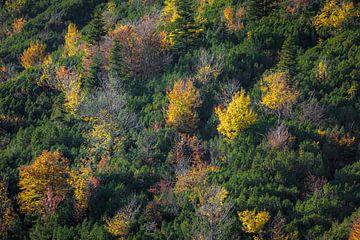 Herbstliche Farben in den Bergen von Emile Kaihatu