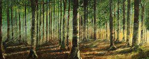 Bäume im Sonnenlicht von Helma 't Lam