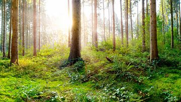 Sonnenaufgang in der Natur von Günter Albers