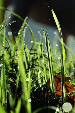 Grassprieten in dauw