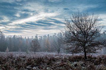 Bevroren veld van René Groenendijk