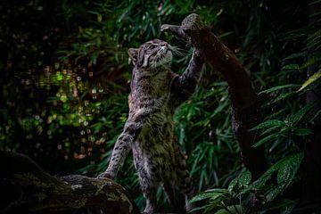 Angeln Katze von Evi Willemsen