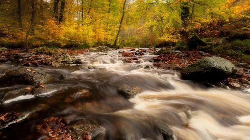 Belgie - Ardennen - Vallei van de Hoëgne tijdens de herfst