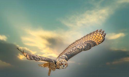 Een Euraziatische oehoe of oehoe. Vliegt met uitgespreide vleugels tegen een dramatische hemel.