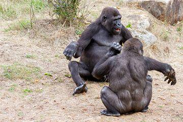 Gorilla's heerlijk aan het stoeien van Arnold van der Horst