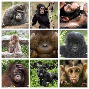apen collage van Marja Hoebe