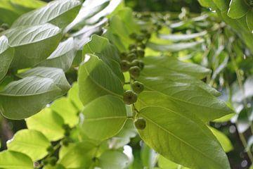 Tropische plant van richard de bruyn