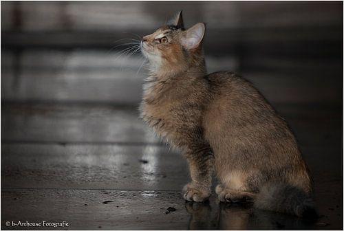 Noorse Boskat Kitten  van