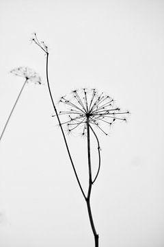 Less is more van Ingrid Meuleman