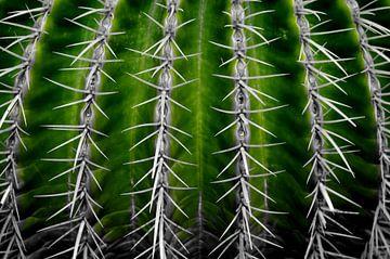 Cactus in Green van De Rover