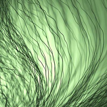 Donkere vezels groen van Jörg Hausmann