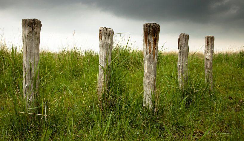 Old poles van Anne Koop