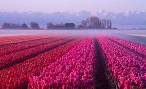 The beauty of the Netherlands van Elena Jongman