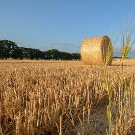 Balles de paille près de Nadelitz, au moment de la récolte à Rügen sur GH Foto & Artdesign