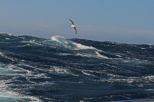 Alabatros boven stormachtige zee van
