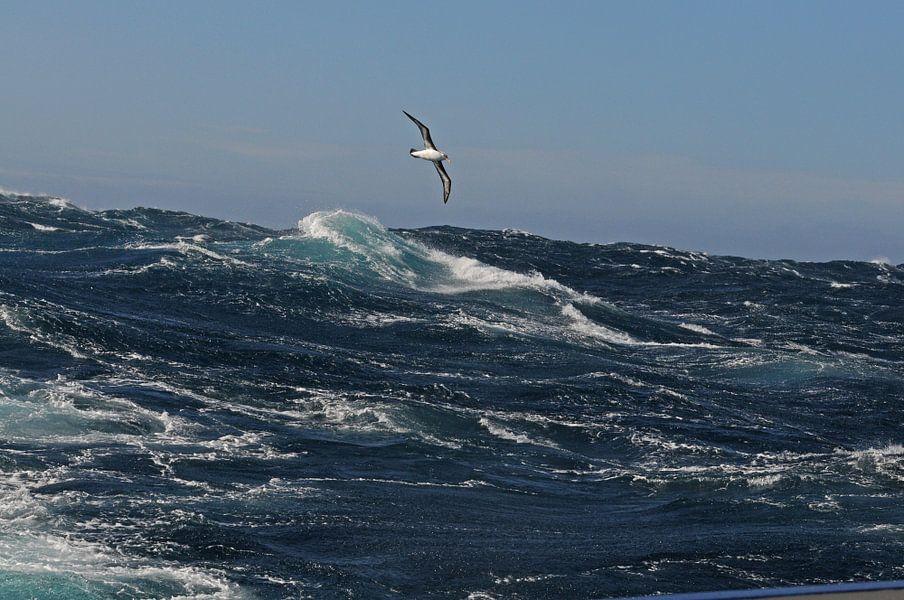 Alabatros boven stormachtige zee