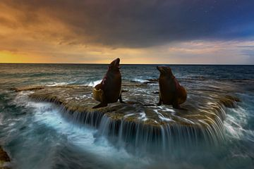 Twee zeehonden van H.m. Soetens