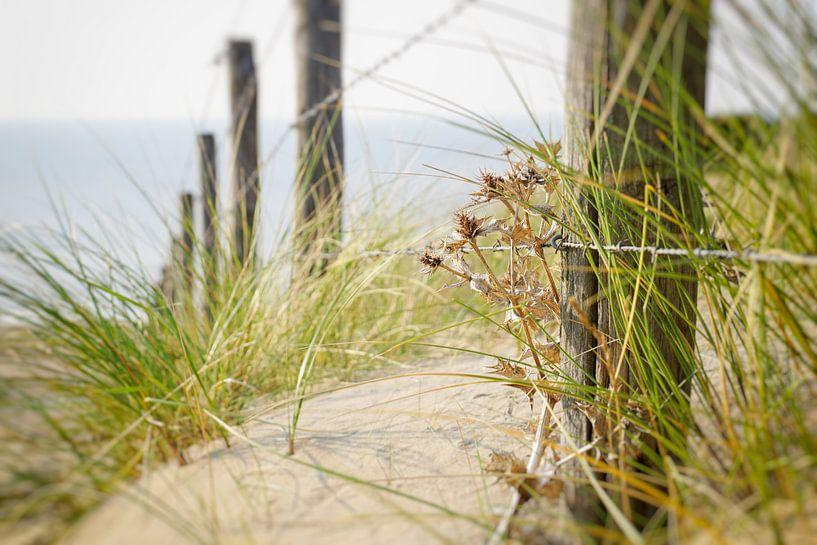 duin aan het strand van Dirk van Egmond