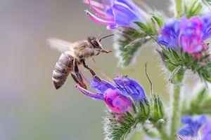 Bijen in bloei van Dennis Eckert