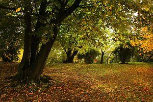 Kleurenpracht in de herfst van