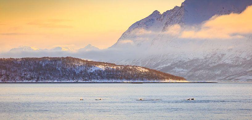 Dolfijnen in een fjord van Sander Meertins