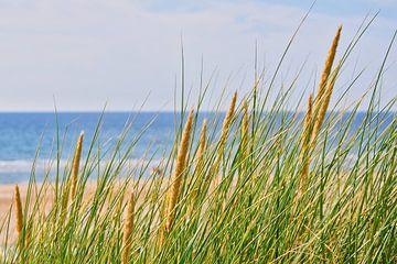 Helmgras in de duinen van Egmond aan Zee van Ton Wever