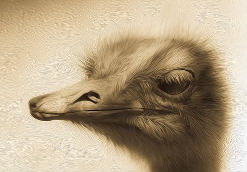 Struisvogelkop van