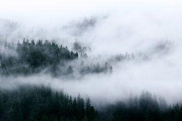 Nebel in den Gipfeln von Nathan Marcusse