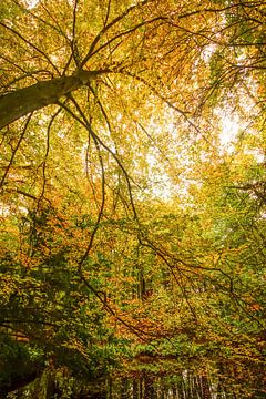 bos in de herfst van Dirk van Egmond