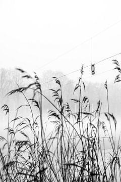 Durch das Schilf im Nebel, Bosbaan, Amsterdam von Paul van Putten