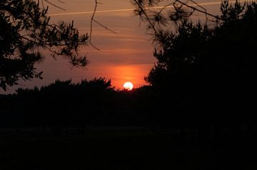 Zonsondergang in donker bos van Poulie Artwork