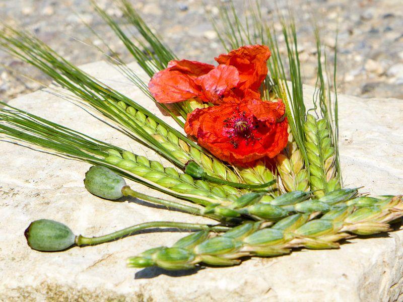 Zomerkleuren - rode papaver en groene oren van Dagmar Hopf