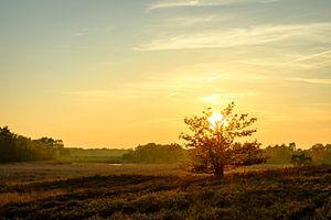 De boom en de zon van