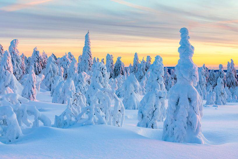 sneeuwcijfers van Daniela Beyer
