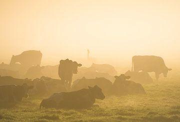 Vaches dans le brouillard sur Roelof Nijholt