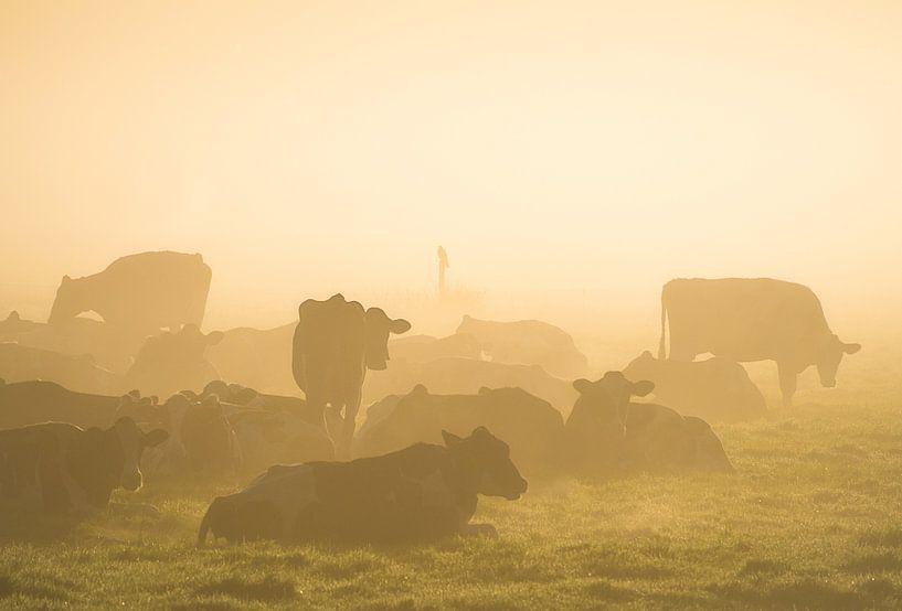 Koeien in de mist van Roelof Nijholt