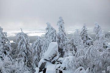 Winterlandschap met mist in het Harz gebergte van t.ART