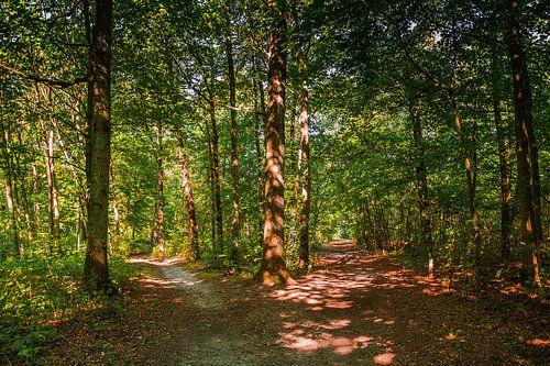 Wandelpaden in het bos