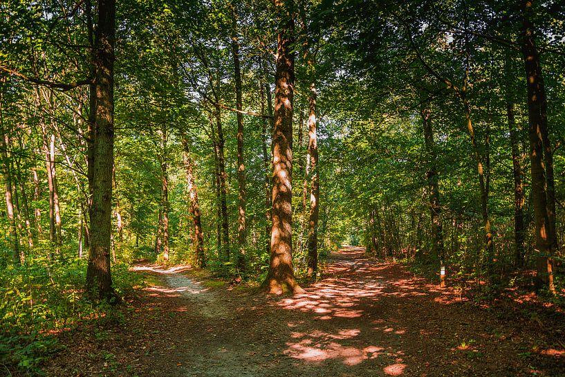 Wandelpaden in het bos van Koop je Canvas