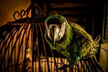 Papegaai op Kooi