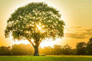 boom in de avondzon van