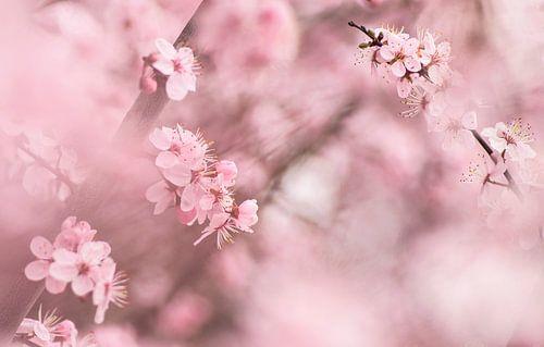 Onder een wolk van bloemen van